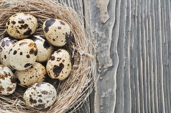 Какие яйца выбрать, Официальный сайт кулинарных рецептов Юлии Высоцкой