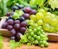 Домашний погребок: делаем виноградное вино своими руками